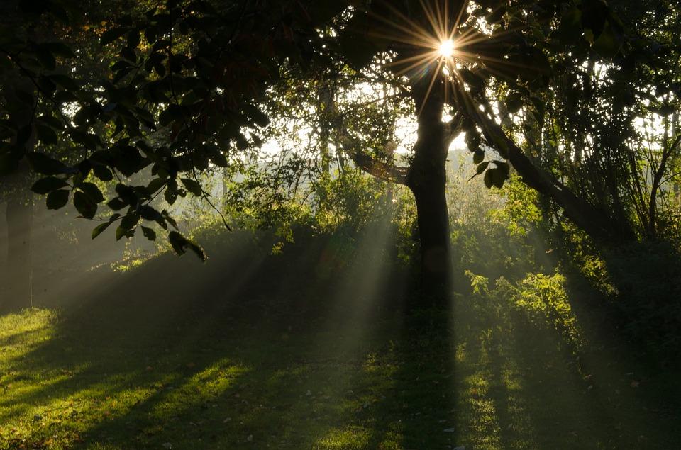 朝活って何をする?朝の時間を有意義に使いたい方にオススメの3つの朝活とは?