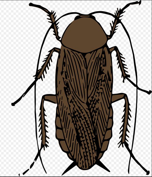 ニュージーランドのゴキブリ事情は?!やっぱり黒いくて大きいの??