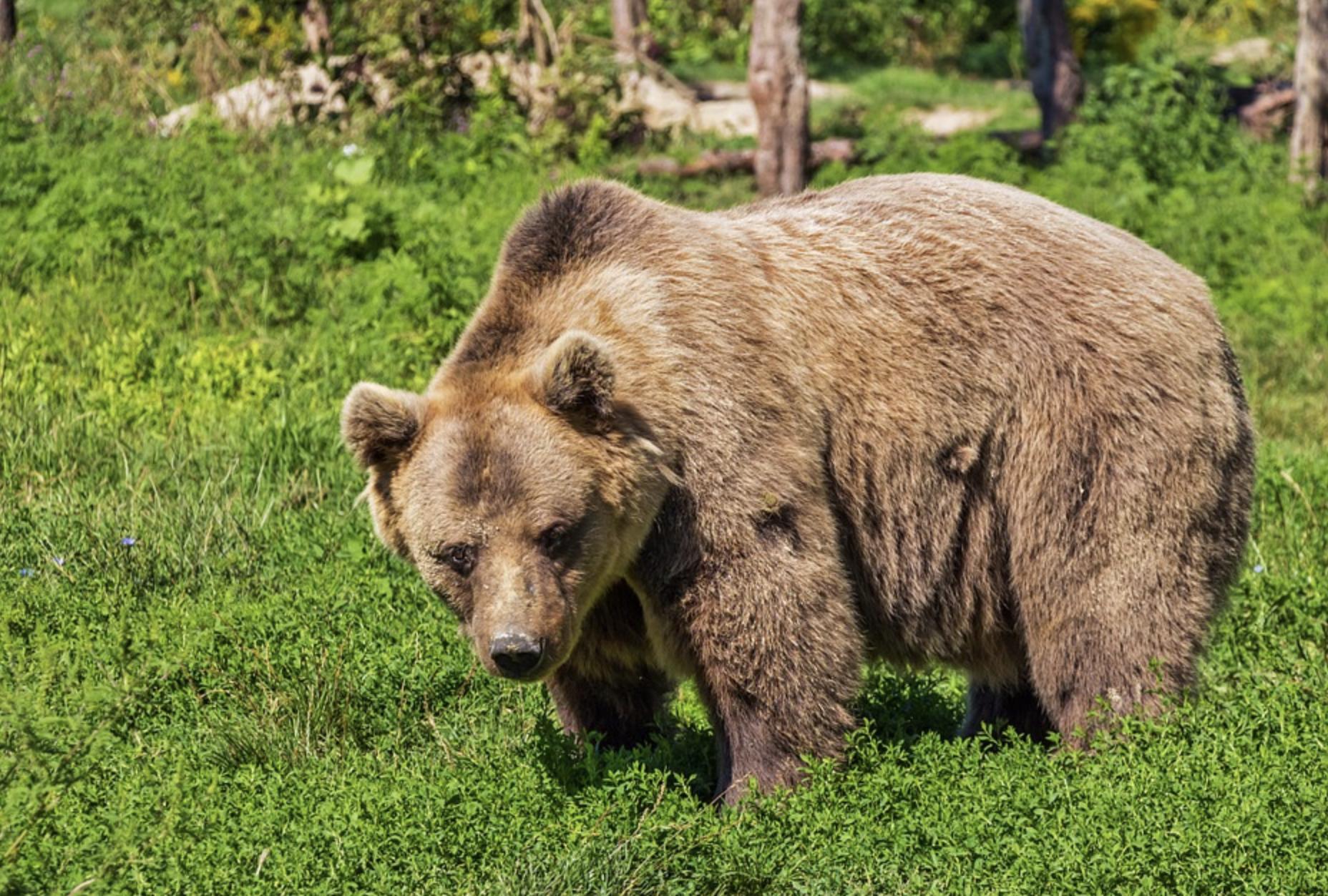 ニュージーランドの危険生物は?山に熊もいるの?!