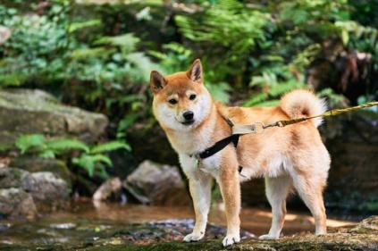グランピング施設で、犬はOKなの?関東編