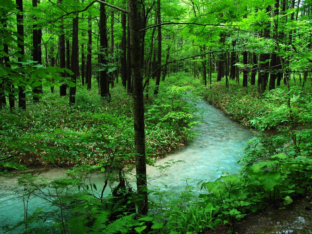 森林浴はこんなところにご注意を!