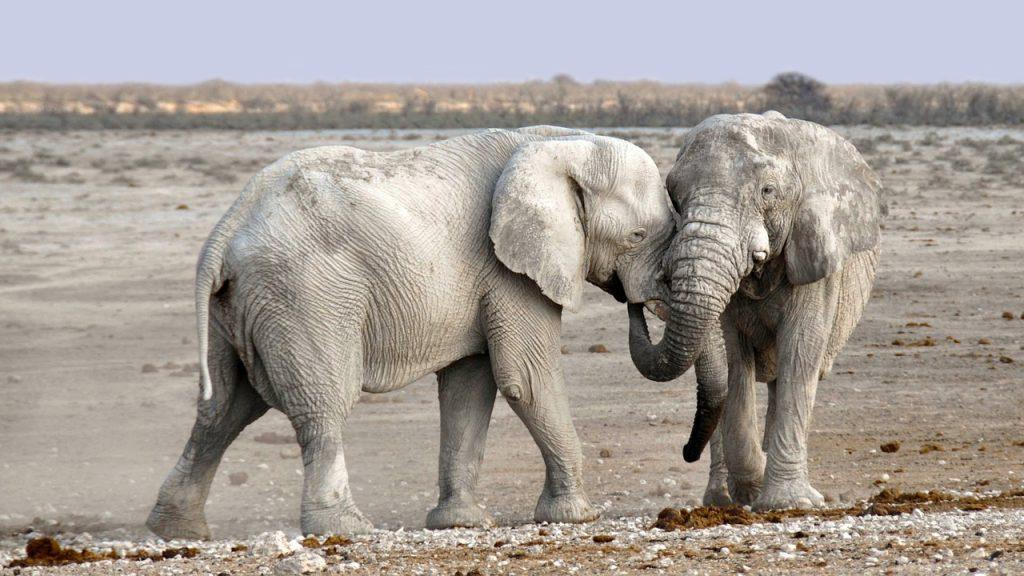 象の鼻には骨があるのか?その真相について調べてみました!