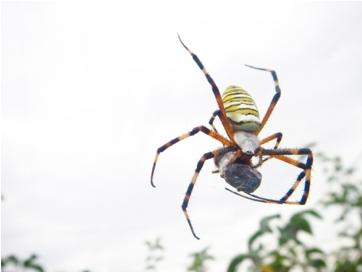 家にいる益虫の役割とは?蜘蛛やゲジゲジは大切な存在なのか?