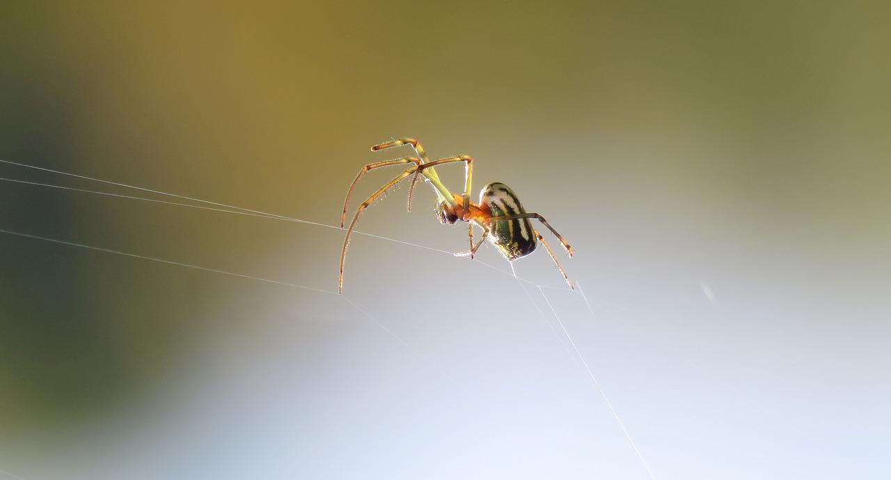 蜘蛛は害虫ではなく「益虫」なのか?