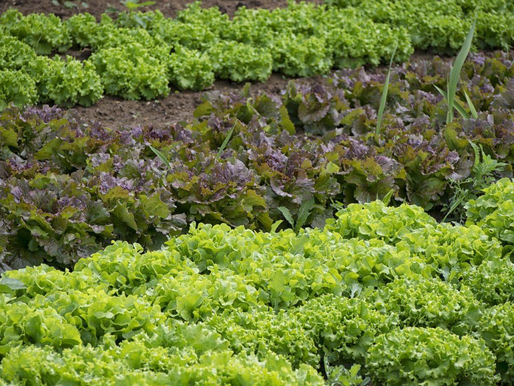 家庭菜園をしたい!庭がなくてもできる野菜の作り方を2つ紹介!