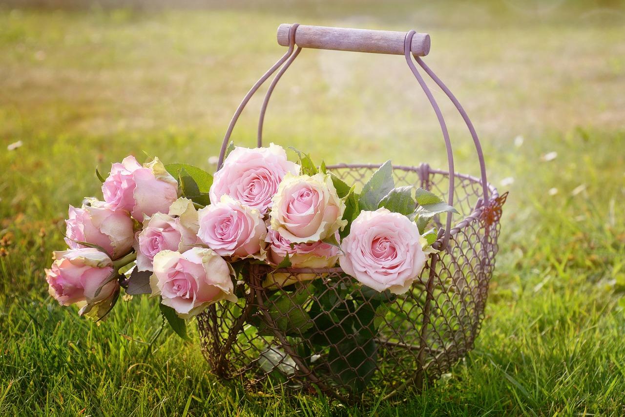バレンタインにバラをプレゼント 贈る本数は何本がいいの?