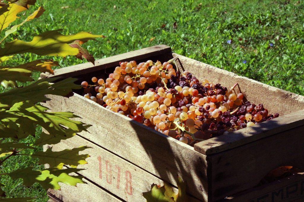 家庭菜園に木箱を活用する際の注意点とは?