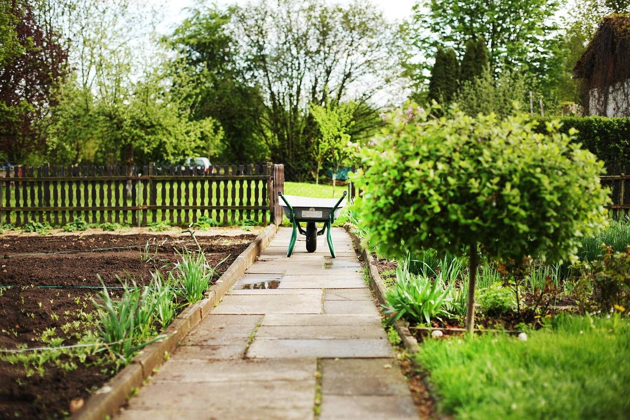 家庭菜園で大葉を育てよう!虫の対策方法を紹介します。
