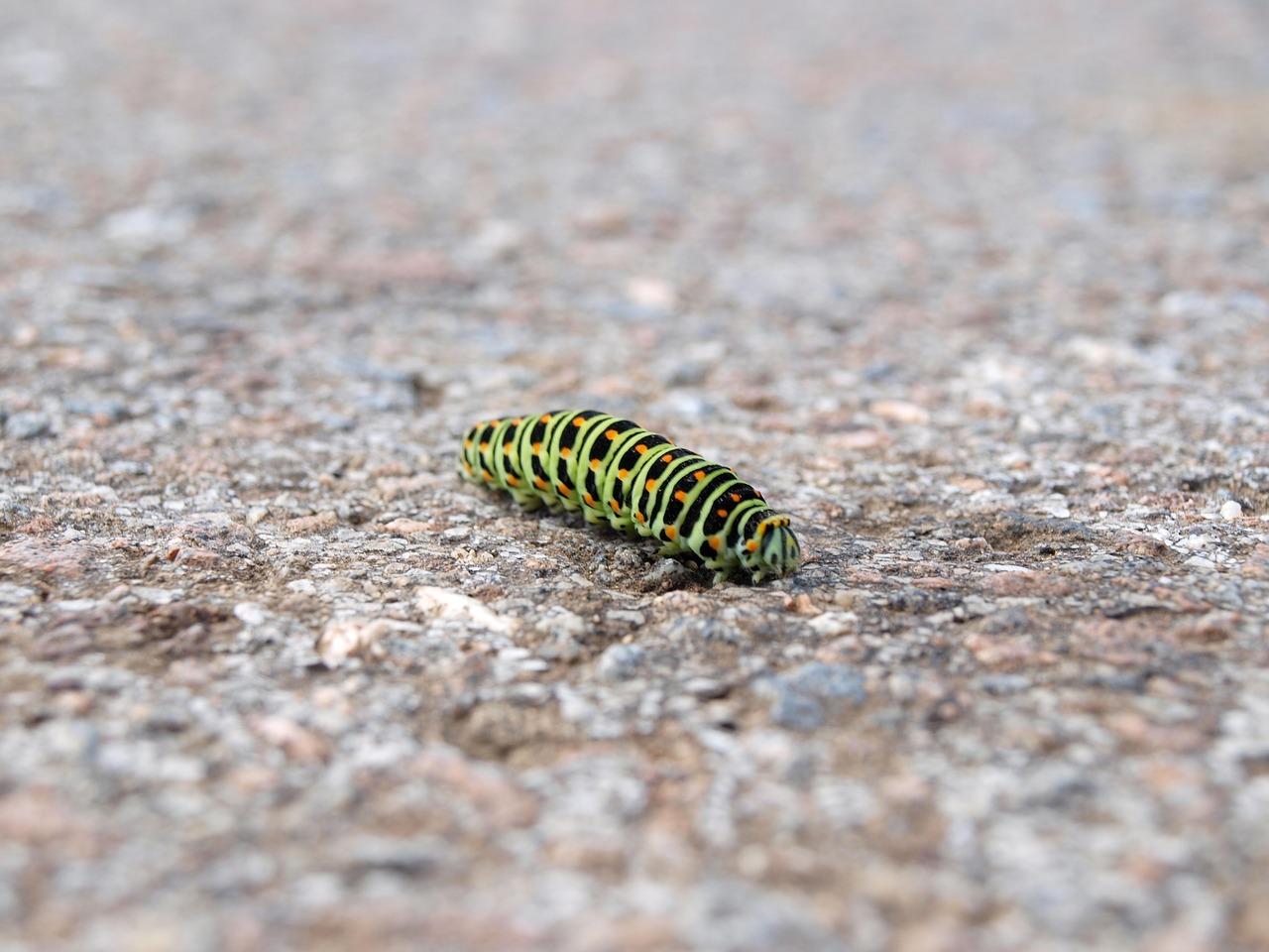 山椒を食べる幼虫はいるのか?山椒を守る方法とは?