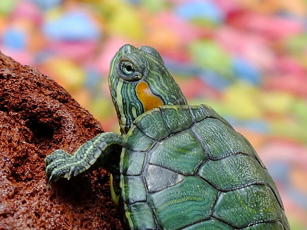 水槽で飼える動物、ペット、爬虫類ってあるの?60cm、90cm、120cm水槽それぞれで紹介します。