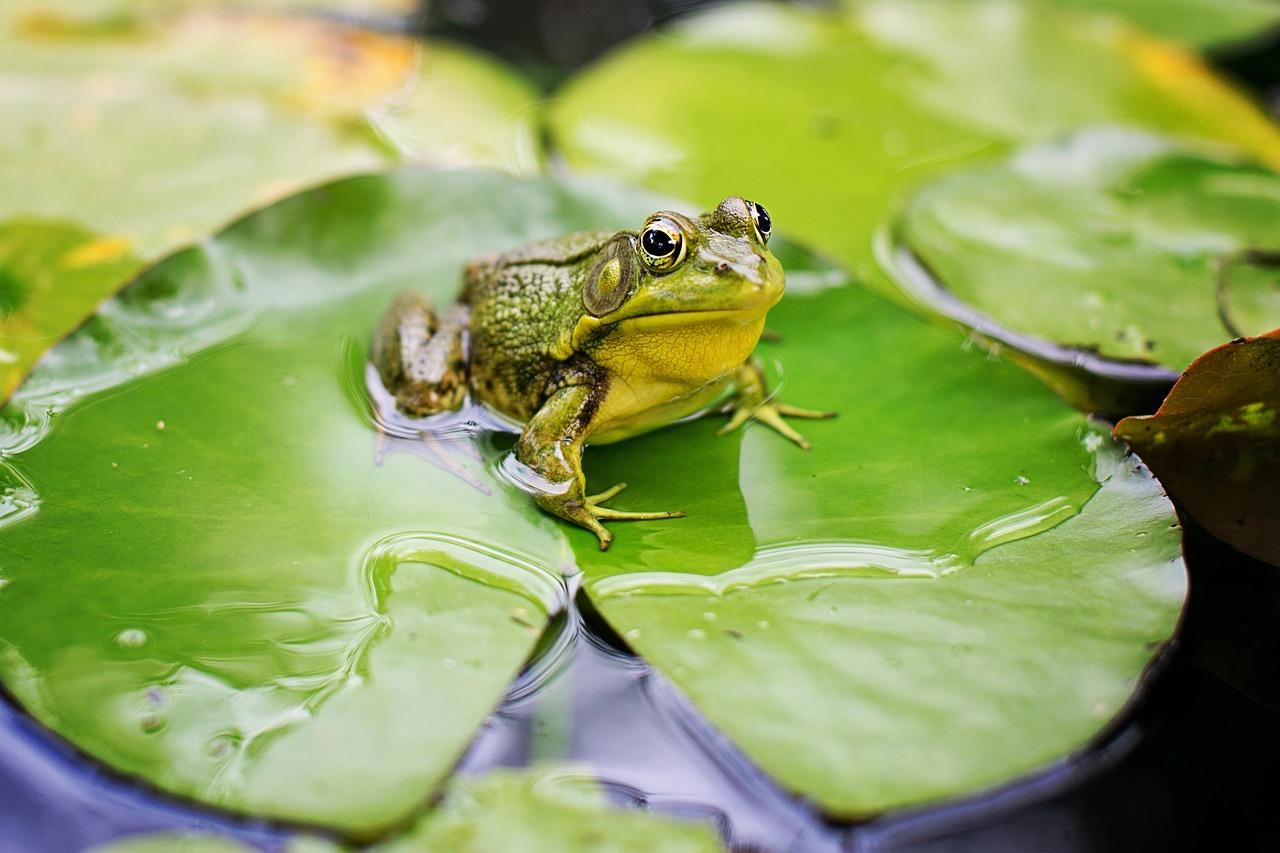 カエルの飼育方法 ヒーターでの保温は必要?植物は置いた方が良い?土や床材はどうしたら良いの?