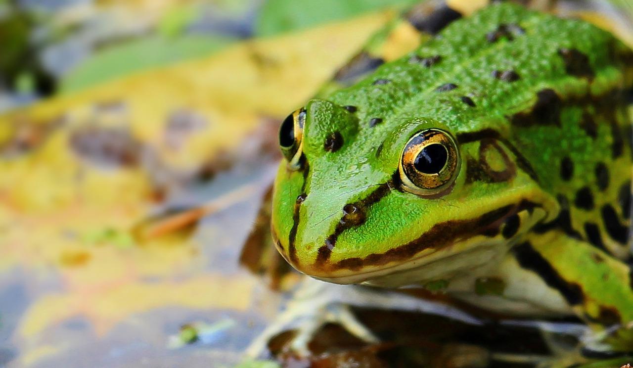 カエルを天敵とする虫とは?カメムシ、ナメクジ、ゴキブリは天敵なのか?