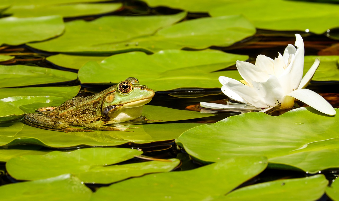 カエルが冬眠する時期とは?温度管理は重要なの?冬眠させないで飼育する事は可能なのか?