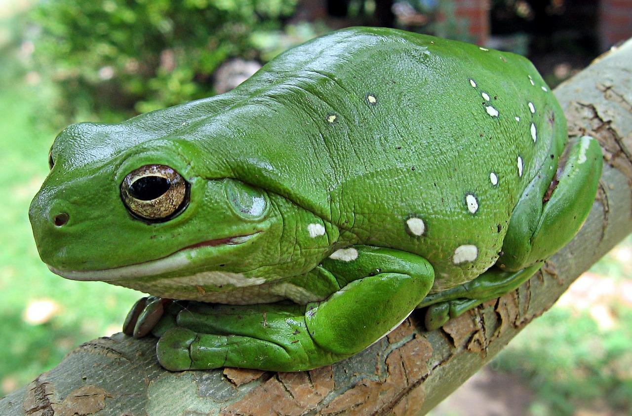 カエル餌はどうしたら良い?ナメクジ、コバエ、コオロギ、クモ、えび、アブラムシ、アリ、ワラジムシを食べるの?