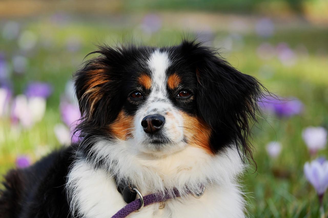 シリカエタノールを犬が誤飲 対処方法はどうしたらいいの