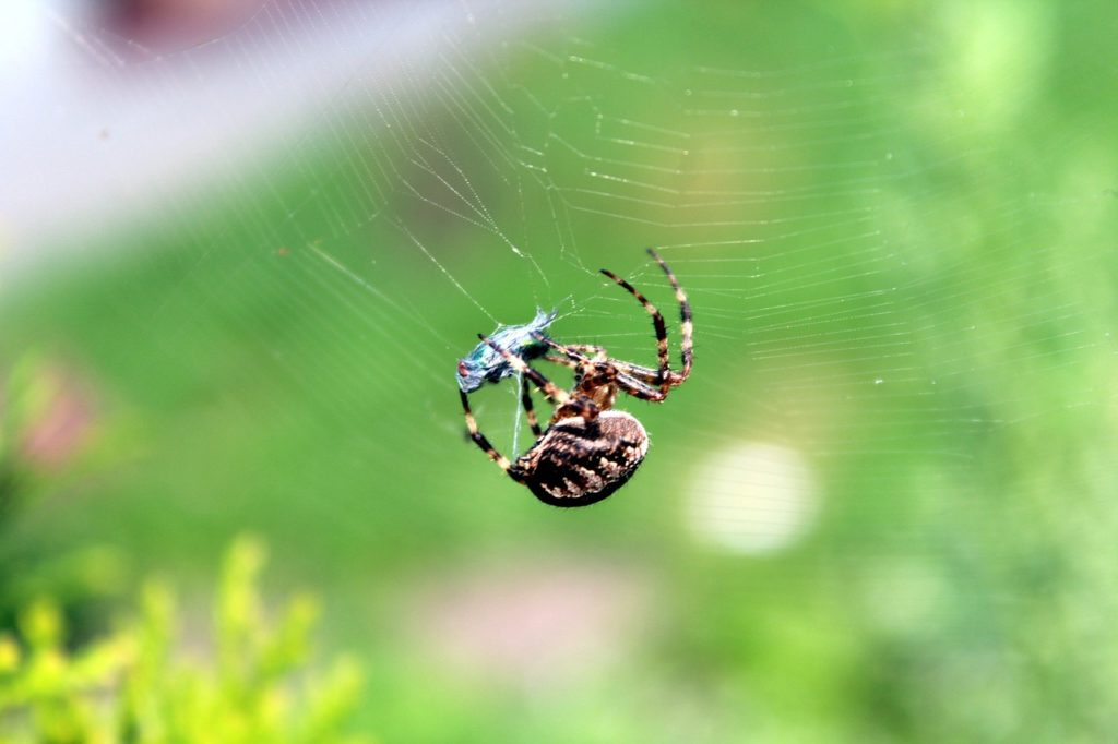 蜘蛛はどこから現れる?蜘蛛の侵入経路や防止策は?