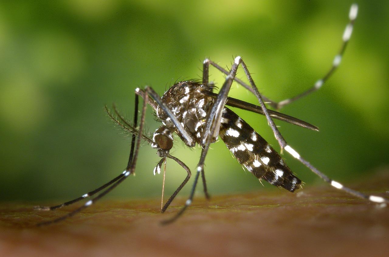 蚊が媒介する感染症は恐い?刺されない対策とは?
