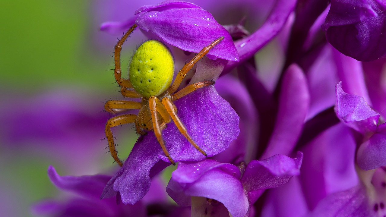 蜘蛛が大きい家の中の茶色や黒い蜘蛛は危険なの?