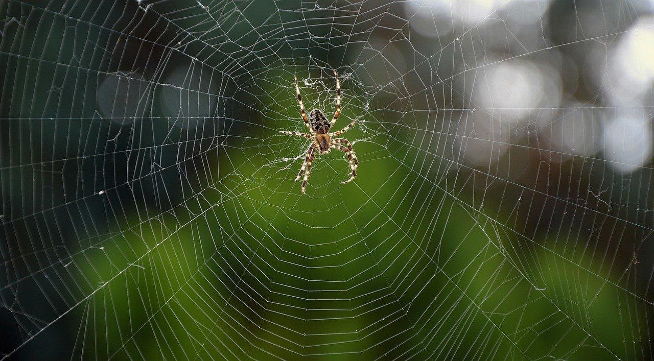 蜘蛛が多いのは産卵のせい?対策はどうしたら良いのか?