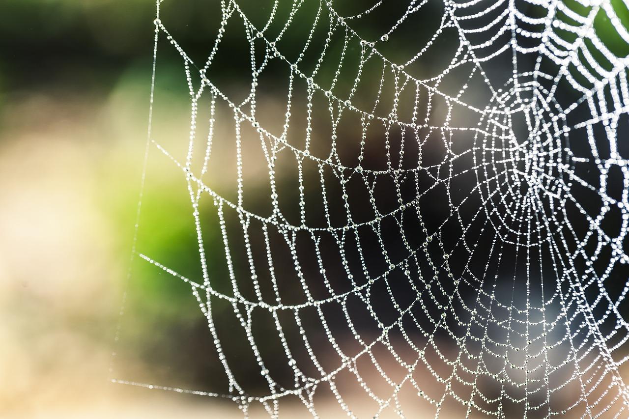 蜘蛛は糸を回収するのか?蜘蛛の巣との意外な関係とは?