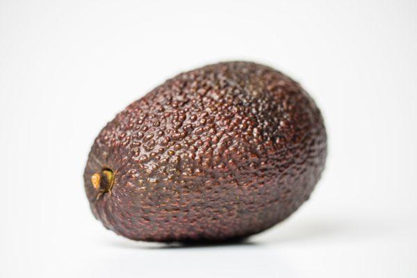 アボガドの新葉がボロボロで落葉。その原因とは?育て方はどうしたら良いの?