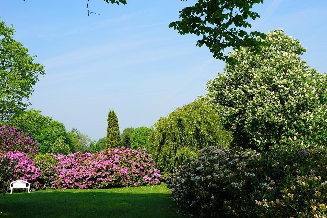 シャクナゲは鉢植えと庭への直植えはどっちが良い?植え替えはしても良い?